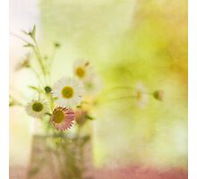 Sun Kissed Daisies Photographic Print