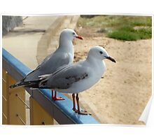 A Similar Pair Of Silver Gulls  Poster