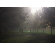 Oak Trees in Fog Photographic Print