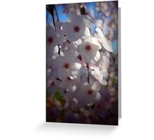 Plum Blossoms Greeting Card