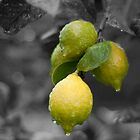 Lemons by Brenton Ford