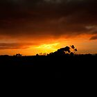 Sunset Silhouette by Brenton Ford