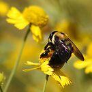 Bee and Daisy by AnnDixon