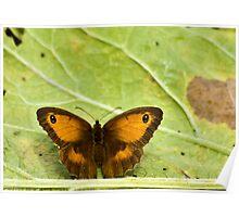 Gatekeeper Butterfly Poster
