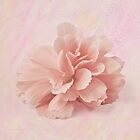 Peach Begonia Fringed Petals by Sandra Foster