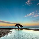 Dusky Mangrove, VictoriaPoint Qld Australia by Beth  Wode