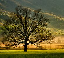 Awaiting Daylight-Cades Cove Tree At Sunrise by Donna Eaton