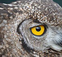 Owl Eye Contact by Cheryl Westerdale