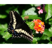 flutterfly (Orton effect) Photographic Print