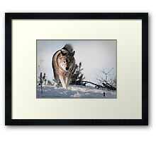 Thumper's in Control (399) Framed Print