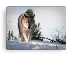 Thumper's in Control (399) Canvas Print