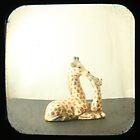 Giraffe Love TTV by Judi FitzPatrick