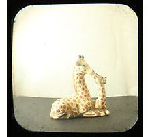 Giraffe Love TTV Photographic Print