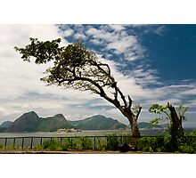 Coast Tree Photographic Print