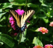 Yellow Swallowtail In Full Monty by kkphoto1