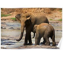 Mother and Young Asian Elephant Poster