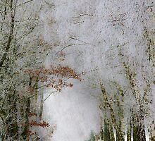 Winter walk by Quasebart
