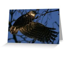 Flight Of The Little Owl - None Captive Greeting Card