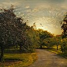 Crabapple Trees at Dusk by Jessica Jenney