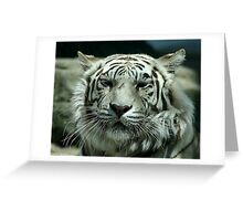 face of the white tiger Greeting Card