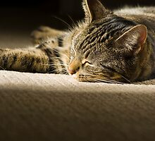 Bella - Cat Nap by Dimbledar