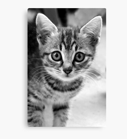 Wide eyed Canvas Print