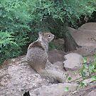 Garden Squirrel by Sarah Trent
