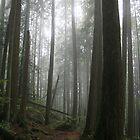 Through The Fog by Tanya Kenworthy-Mosher