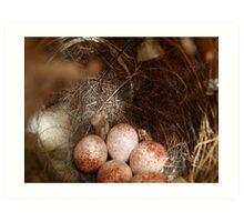 Wren Bird Nest Art Print