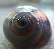Snail shell by valandsnake