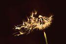 Make a wish by Joshua Greiner