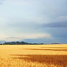 Cornfields in Somerset by Christine Lake