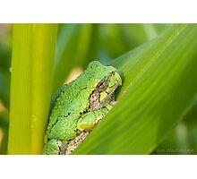 Garden Companion Photographic Print