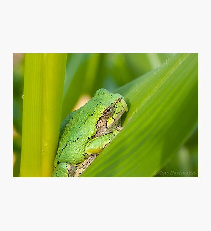 Garden Companion Photographic Print