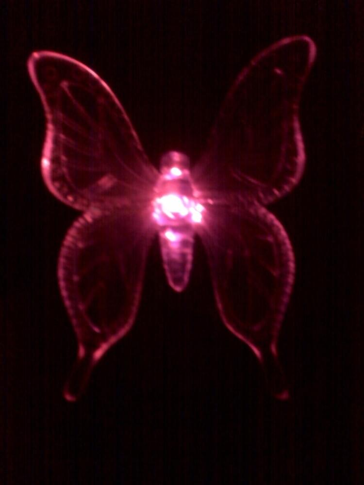 Butterfly in Red by Dan McKenzie