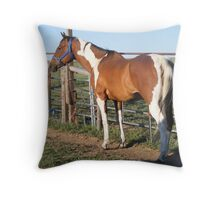American Paint Horse Throw Pillow