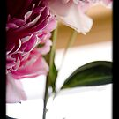 Peony 4 by tntimages