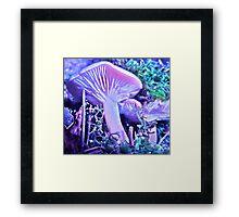 Colorado fungi Framed Print