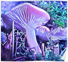 Colorado fungi Poster