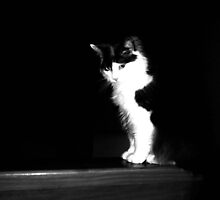 Sly Cat by GeorgiaLove