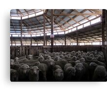 The Holding Pen - Deeargee Woolshed, Northern Tablelands, NSW, Australia Canvas Print