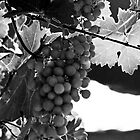 Don't Eat the Wine #3 by PhotosByTraci