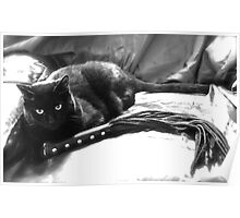 Leather Kitty Poster