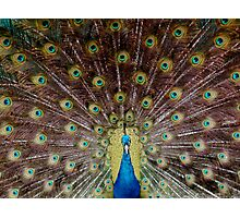Cocky Bird Photographic Print