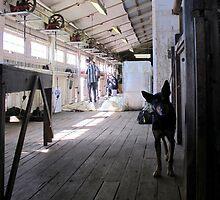 The Sheep Dog - Australian Working Kelpie by Kitsmumma