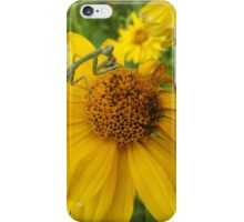 Insect and Flower Close-Up, Santa Fe, New Mexico iPhone Case/Skin