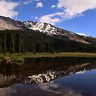 Pond Reflections by Vickie Emms