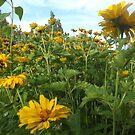 Colorful Garden, Santa Fe, New Mexico by lenspiro