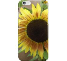 Colorful Sunflower, Canyon Road, Santa Fe, New Mexico iPhone Case/Skin