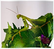Mantis 2 Poster